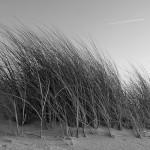 Wind im Gras
